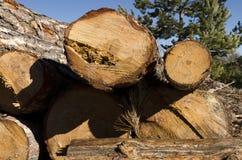 Bauholz von Koniferen in einem Berg in Bulgarien Stockfoto