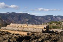 Bauholz von Koniferen in einem Hügel Lizenzfreie Stockbilder