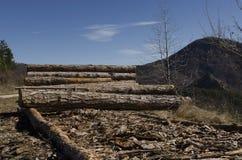 Bauholz von Koniferen in einem Hügel im Rhodope-Berg Lizenzfreie Stockbilder
