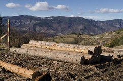 Bauholz von Koniferen in einem Schlamm auf einem Hügel Stockfotos