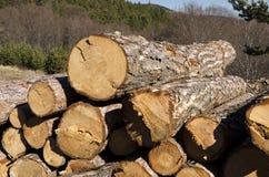 Bauholz von Koniferen ohne Kennzeichen im Rhodope-Berg Stockfotos