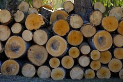 Bauholzholz auf einem Stapel lizenzfreie stockbilder