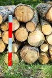 Bauholzholz, zackte in einem Wald lizenzfreie stockfotografie