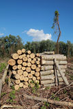 Bauholzindustrie lizenzfreie stockfotos