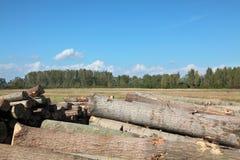 Bauholzindustrie stockfoto
