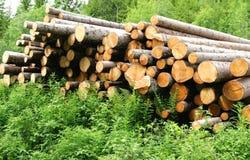 Bauholzprotokolle Lizenzfreie Stockfotos
