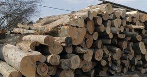 Bauholzprotokollierung Schneiden Sie frisch die h?lzernen Klotz des Baums, die oben angeh?uft werden Holzlagerung f?r Industrie stockfotos