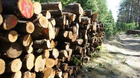 Bauholzstapel auf dem Waldstraßenrand stockbilder