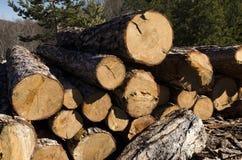 Bauholzstapel von Koniferen in Rhodope-Berg Lizenzfreie Stockfotos