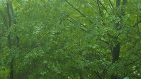 Baumökologie des Regens des schlechten Wetters Waldfallende grüne stock video footage