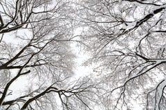 Baumüberdachung in einem Schneesturm Lizenzfreie Stockfotos