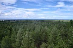 Baumüberdachung von oben Lizenzfreie Stockbilder