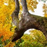 Baum ähnelt einem Tier im Park Ein Baum mögen ein Rotwild Stockfotografie