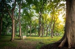 Baum-öffentlich Park Stockfoto