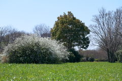 Baum-öffentlich Park Lizenzfreie Stockbilder