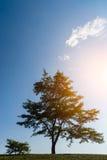 Baum über blauem Himmel Lizenzfreie Stockbilder