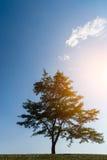Baum über blauem Himmel Lizenzfreies Stockbild