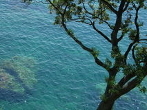 Baum über dem Mittelmeer Stockfotos