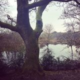 Baum über dem See stockfoto