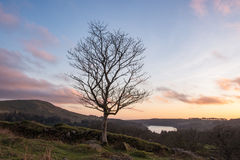 Baum über dem See Stockfotografie