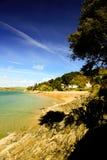 Baum über dem Strand auf dem Ufer bei Salcombe stockfotos