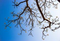 Baum über Naturhintergrund Frühling blüht/Frühlings-Hintergrund Lizenzfreie Stockbilder