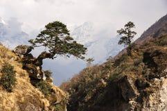 Baum über Schlucht Lizenzfreie Stockbilder