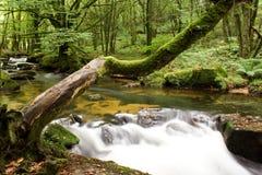Baum über Wasserfall stockbild