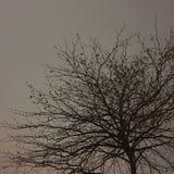 Baum Lizenzfreies Stockbild