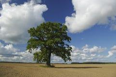 Baum. Lizenzfreie Stockfotos
