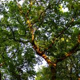 Baum 002 Stockbild