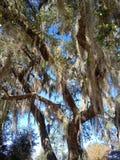 Baum 2 stockfotografie