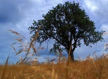 Baum? Lizenzfreies Stockbild
