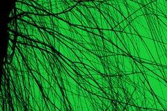 Baum stock abbildung