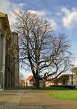Baum Stockbild