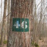 Baum 46 Lizenzfreies Stockfoto