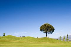 Baum Stockbilder