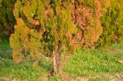Baum Stockfoto