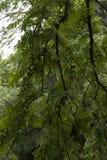 Baum Lizenzfreie Stockbilder