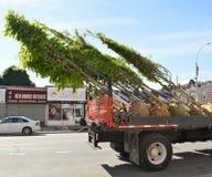 Baum-Abbau auf LKW Stockbilder