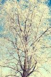 Baum abgedeckt durch einen Schnee im Winter Lizenzfreie Stockbilder