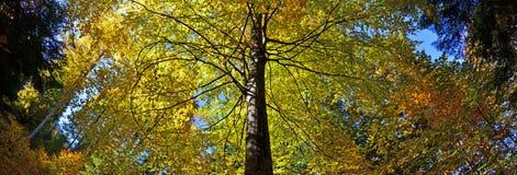 Baum abgedeckt durch Herbst stockfotografie