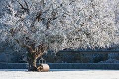 Baum abgedeckt im Hoarfrost stockfotos