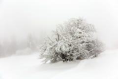 Baum abgedeckt mit Schnee Stockbilder