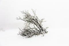 Baum abgedeckt mit Schnee Stockfotografie