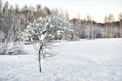 Baum abgedeckt mit Schnee Lizenzfreie Stockfotografie