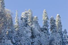 Baum abgedeckt mit Schnee Stockfoto