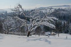 Baum abgedeckt mit Schnee Stockbild
