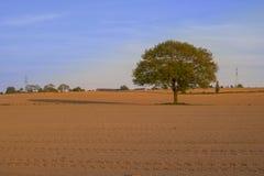 Baum allein auf einem Gebiet Lizenzfreies Stockbild