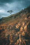 Baum allein im Hügel stockfotografie